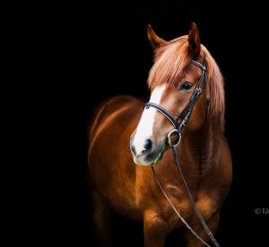 Equine_photographer-10